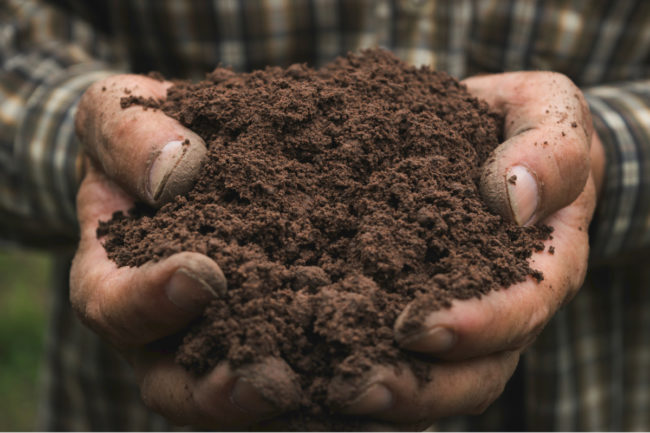 Farmer's hands holding soil