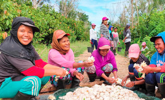 Indonesiancocoafarmworkers lead