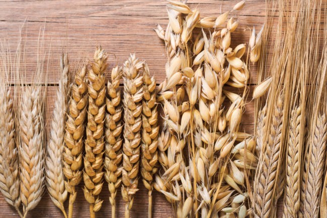 Wheat and oats