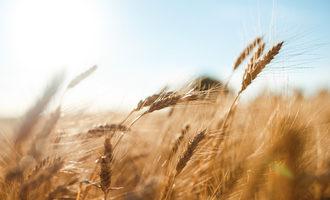 Bentwheat lead