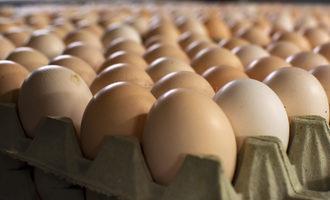 Eggs lead
