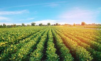 Farmland lead