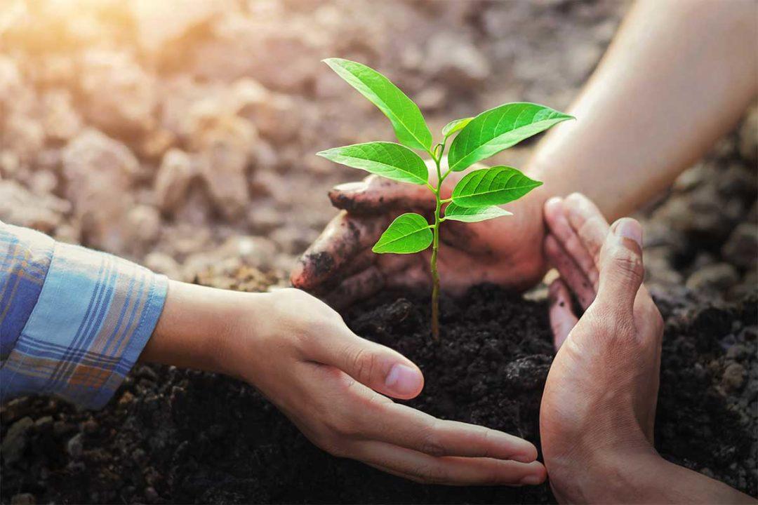 Adobe Stock, Sustainability