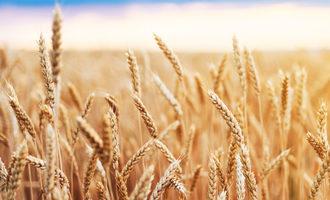 Goldenwheatfield lead