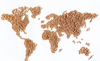 Worldmapwheatkernels lead