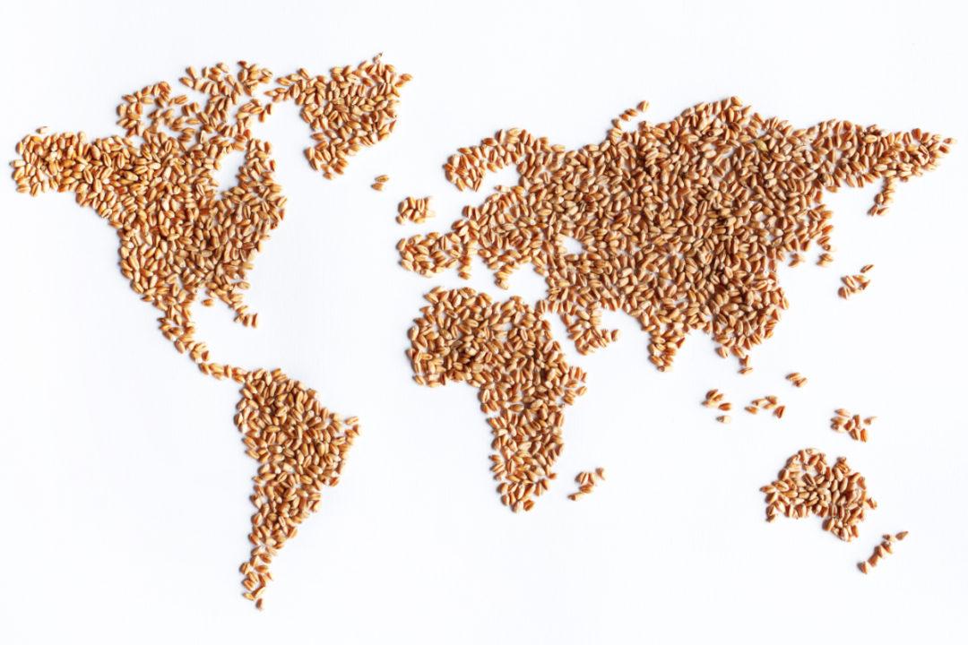 World map in wheat kernels
