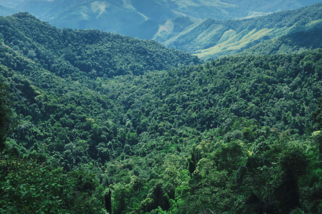 Forested mountains