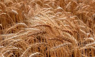 Kansaswheat1200x800