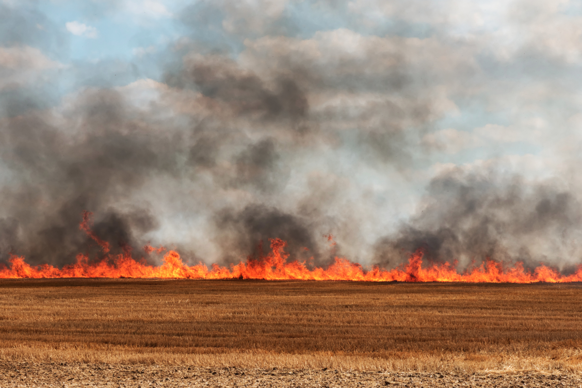 Wheat field fire