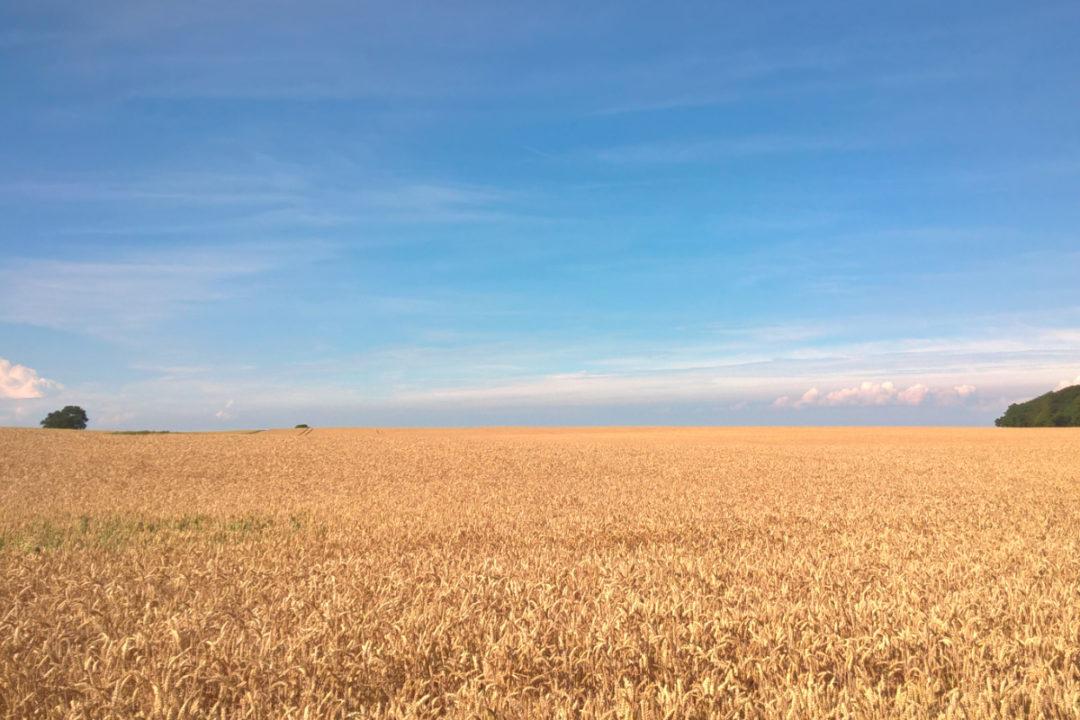 Mühlenchemie GmbH & Co. KG wheat field