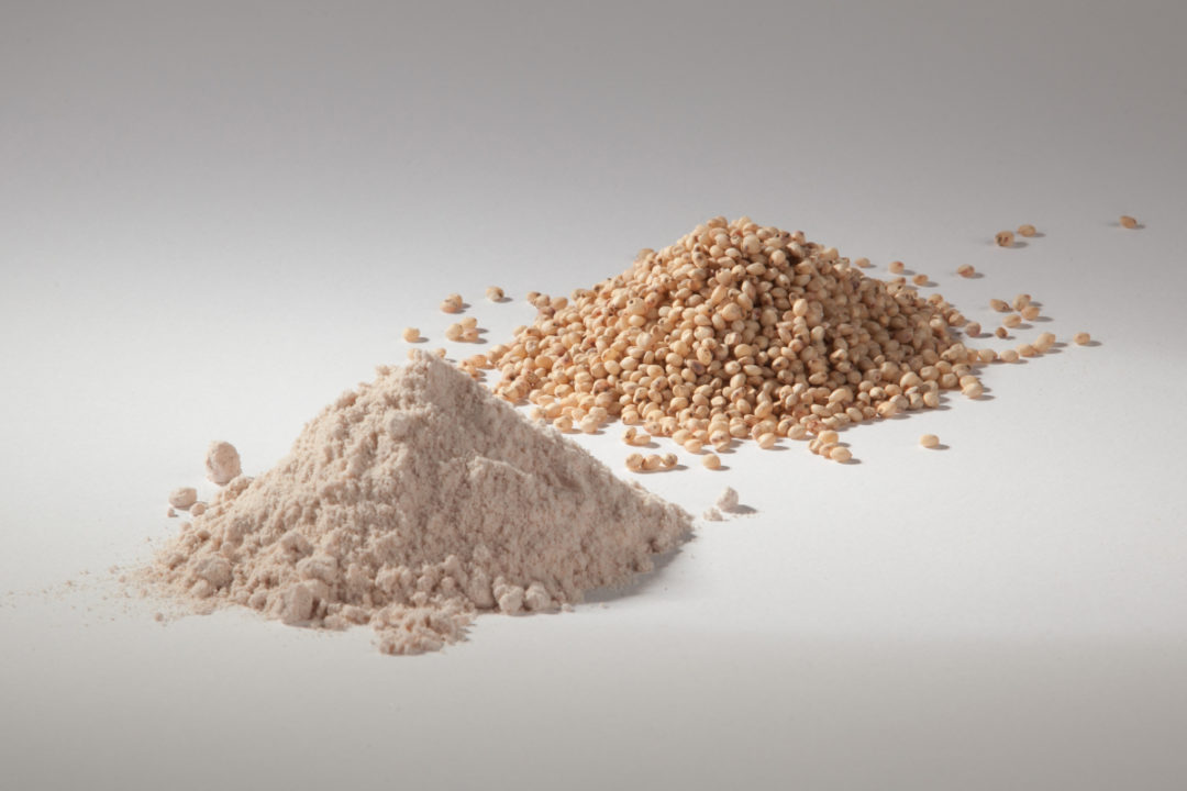 Sorghum and sorghum flour