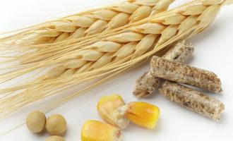 Grainsfeed_lead