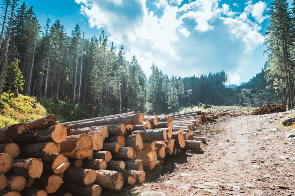 American Forests Applauds Provisions for Forestry in 2018 Farm Bill Conference Report