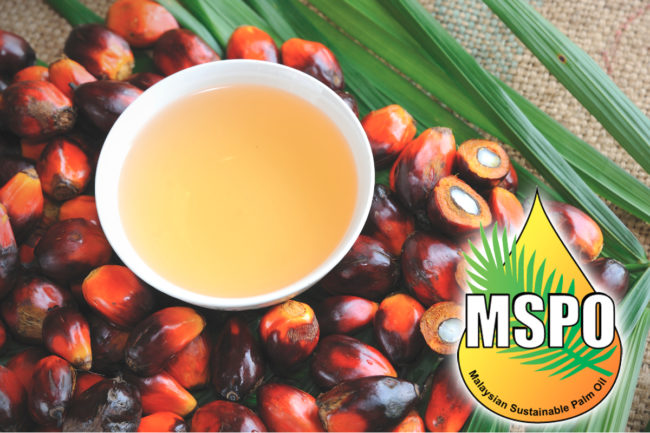Malaysian palm oil and fruit