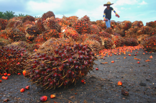 Palm oil harvest
