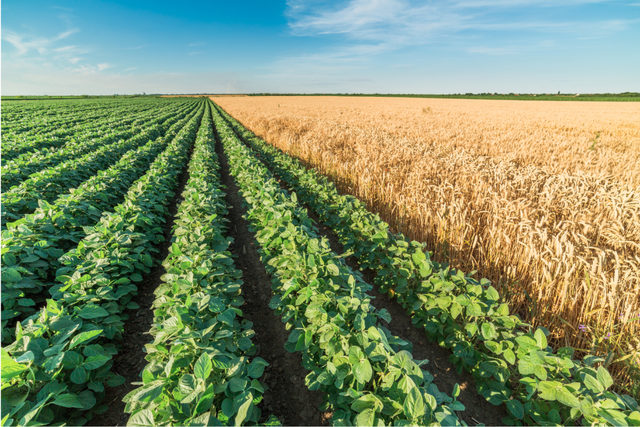Soybeanwheatfield_lead