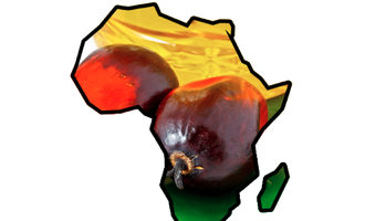 Africapalmoil_lead