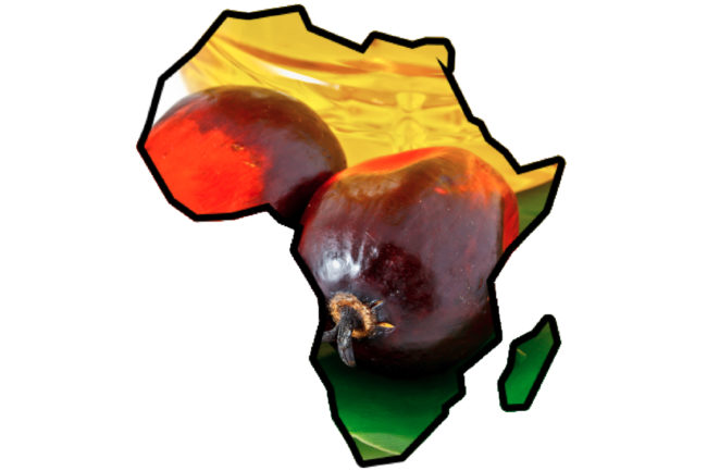 Africa palm oil