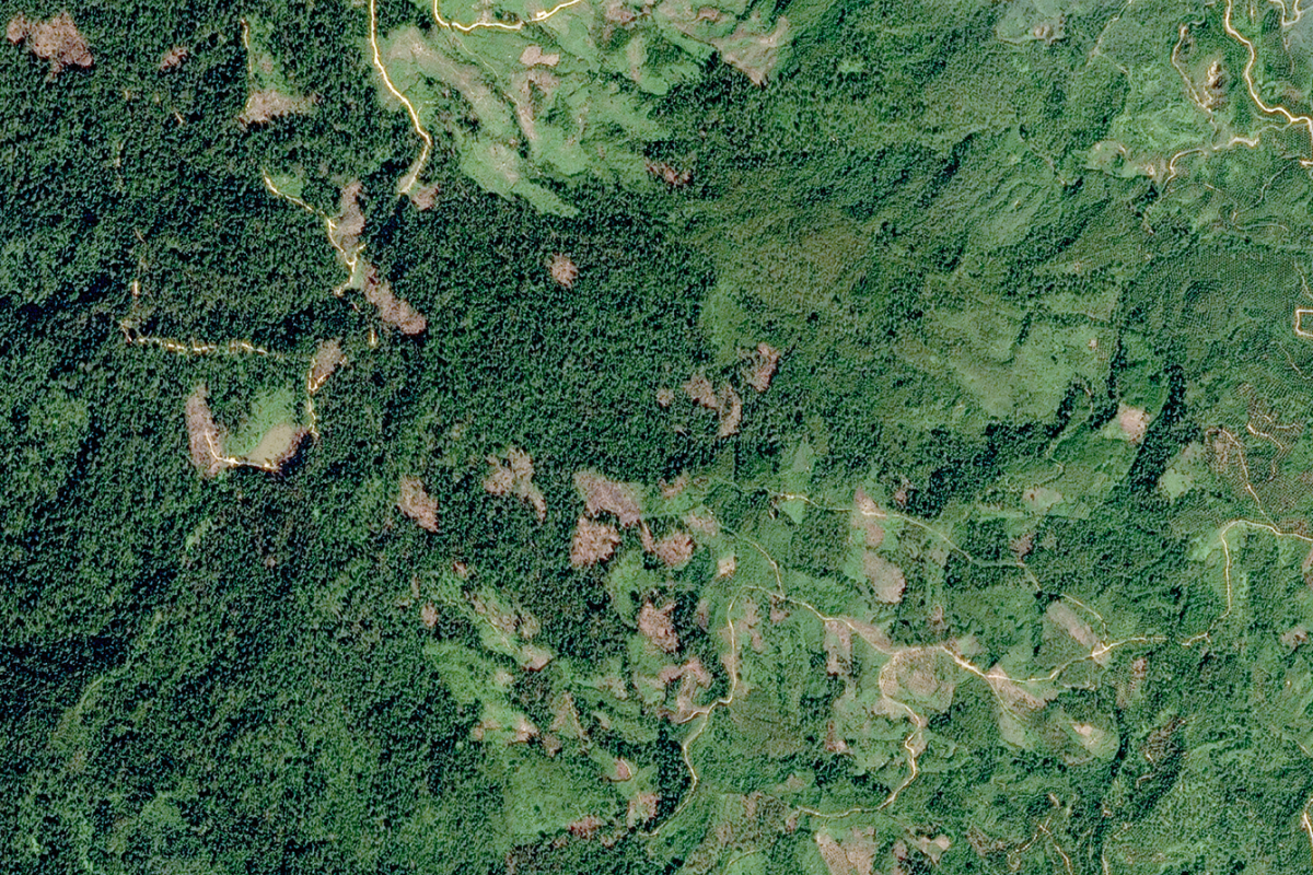 Deforestation aerial view