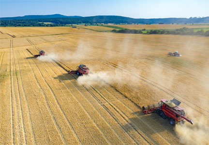 Combines and tractors working in a wheat field