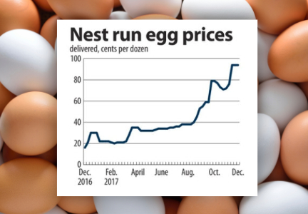 Nest run egg prices chart