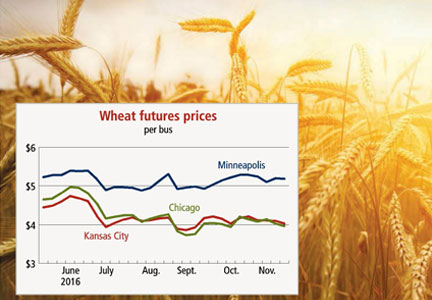 Outlook for wheat prices bearish