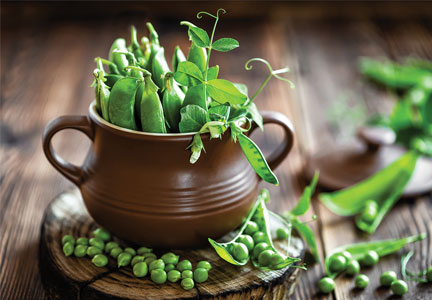 Pea pods in a clay pot